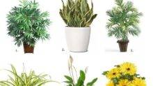 Air Purifying House Plants Useful One