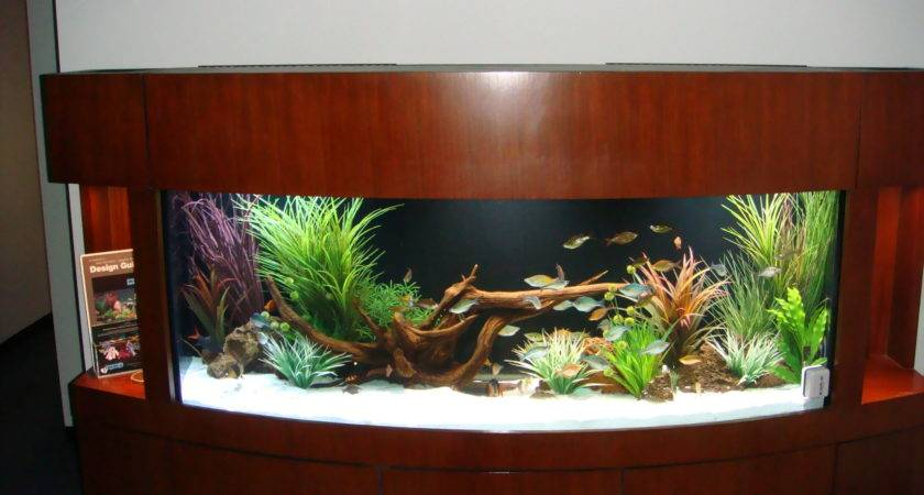 Alluring Convertible Fish Tank Coffee Table Designs