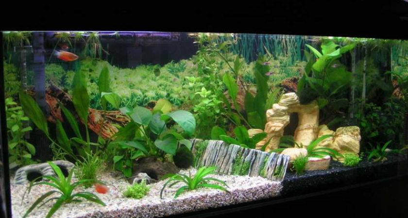 Aquarium Decorating Ideas Interior Home Design