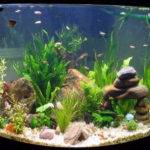 Aquarium Decoration Ideas Interior Decorating Accessories