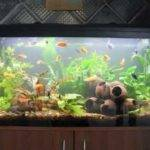 Aquarium Decoration Ideas Youtube Diy