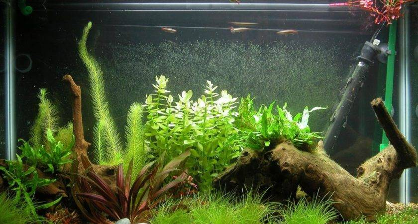 Aquarium Fish Tank Decorations Design Ideas