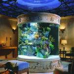 Aquariums Different Types