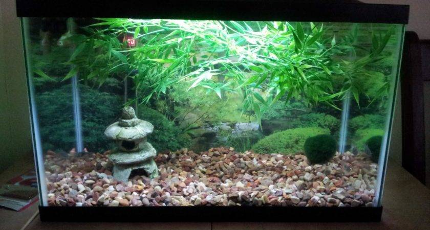 Asian Fish Aquarium Decor Design Ideas
