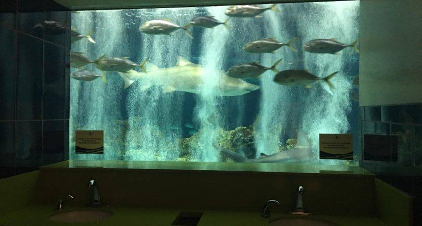 Bathroom Odysea Aquarium Have Shark