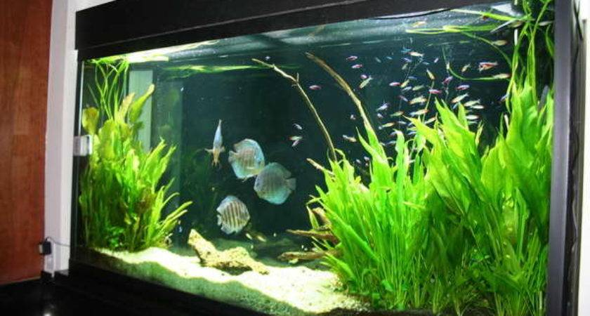 Cool Aquarium Decoration Ideas Speedchicblog