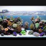 Cool Aquariums Your Home