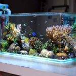 Cool Fish Tank Decorations Aquarium