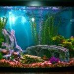 Decor Fish Tanks Aquarium Design Ideas