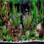 Decoration Tropical Fish Aquarium Themes