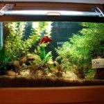 Fish Aquarium Decoration Ideas Design