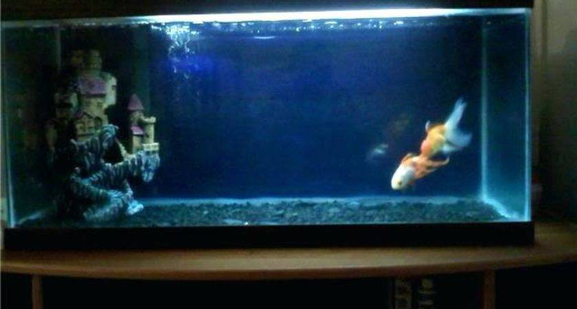 Fish Tank Decoration Ideas Goldfish Aquarium