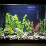 Fish Tank Decorations Aquarium Blog