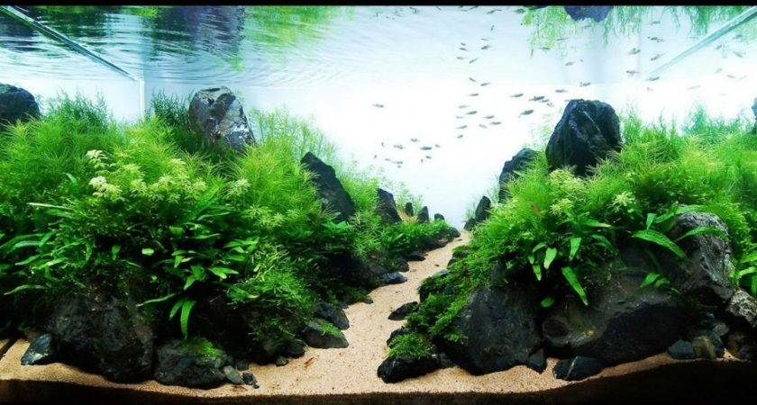 Fish Tank Home Decoration Decorating Excellence