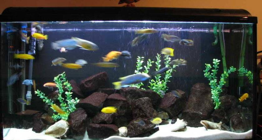 Fish Tank Interior Design Ideas Native Home Garden