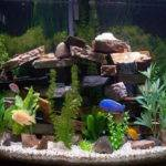 Freshwater Aquarium Design Ideas Quotes
