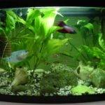 Freshwater Aquarium Fish Ideas Home Decor Pics