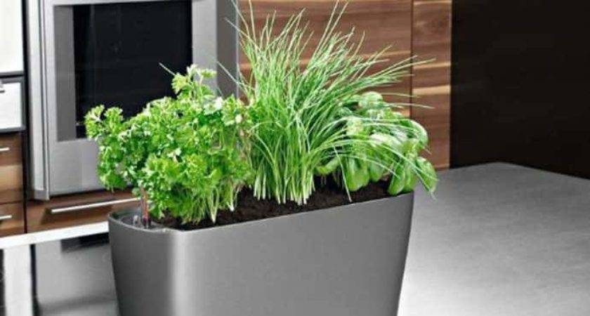 Gadgets Your Kitchen Herbs