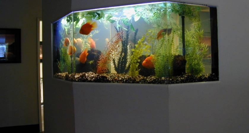 Gallon Freshwater Fish Tank Aquarium Design Marine