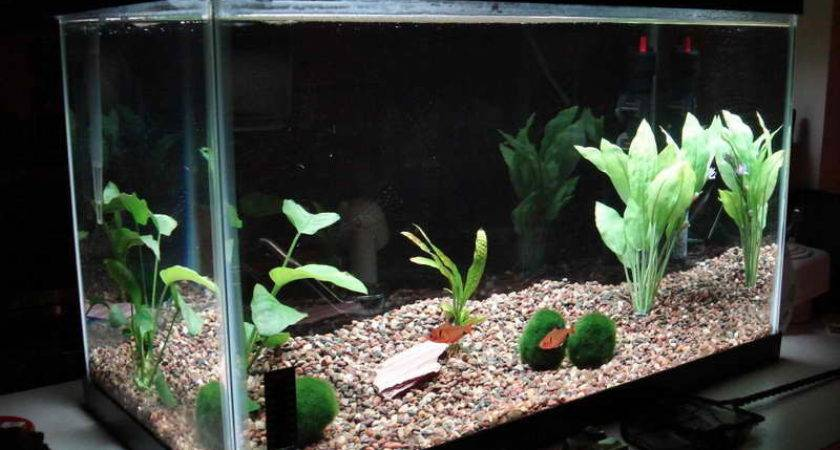 Home Accessories Cool Aquarium Decorations Build