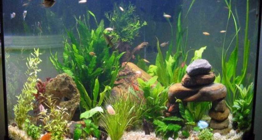 Home Accessories Cool Aquarium Decorations Make