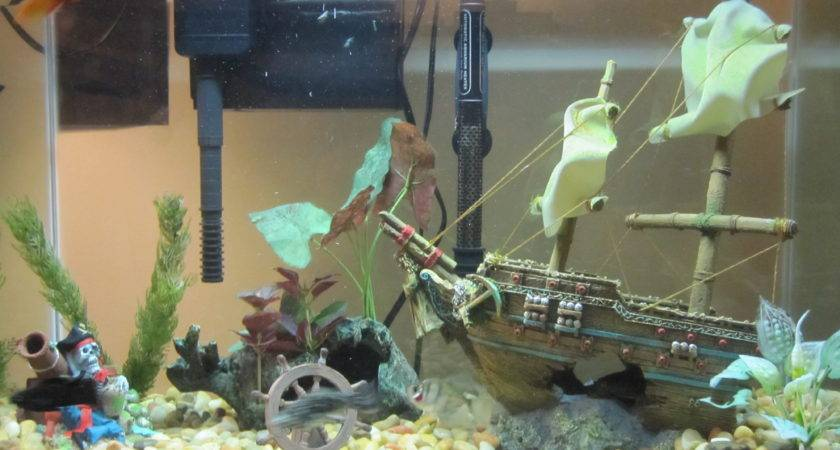 Ideas Decorating Fish Tanks Mani Life