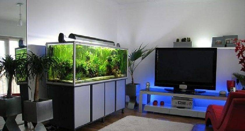 Improve Your Home Modern Fish Tank