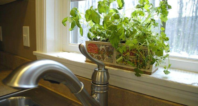 Kitchen Herb Plants Archives Living Rich Lessliving