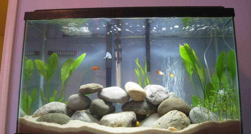 Preparing Aquarium Decorations Your