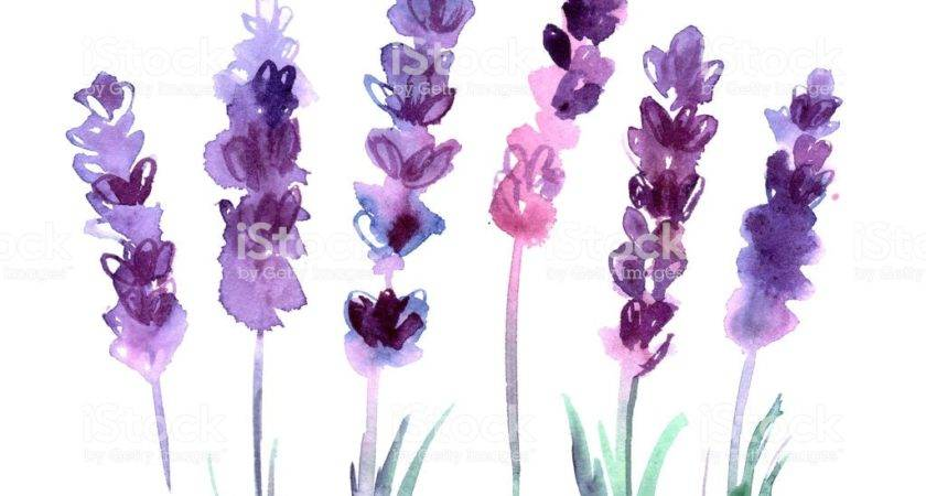 Watercolor Hand Painted Lavender Flowers White