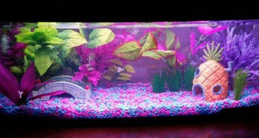 Wow Cool Fish Tank Decoration Ideas Copy Them